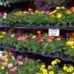 Beautiful Bedding Plants